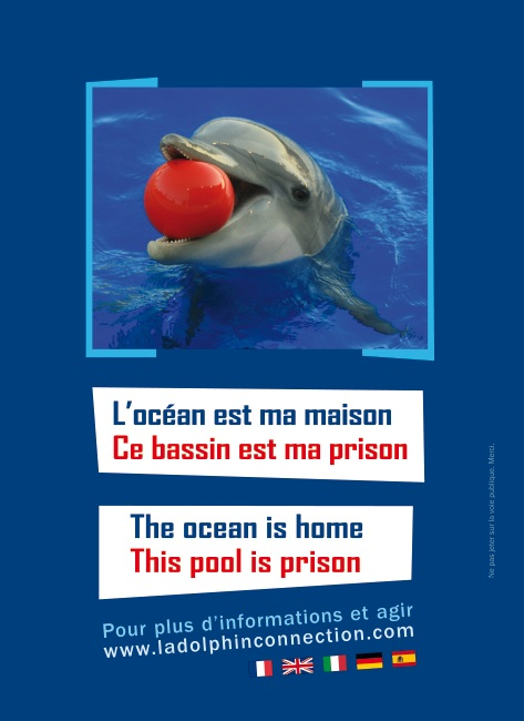 tract_operation_pour_les_dauphins_antibes_recto.jpg